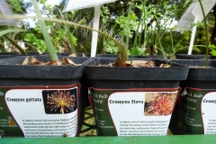 bulbs available in our retail nursery