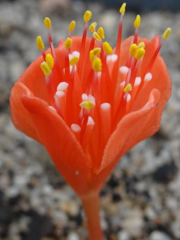 Find out about our bulb export service
